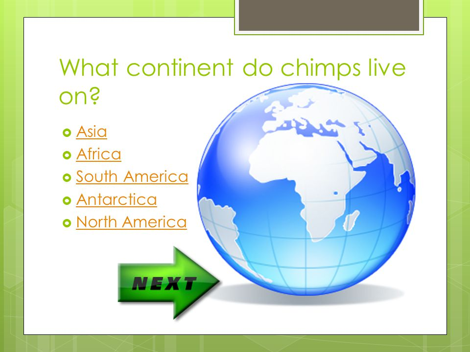 What continent do chimps live on