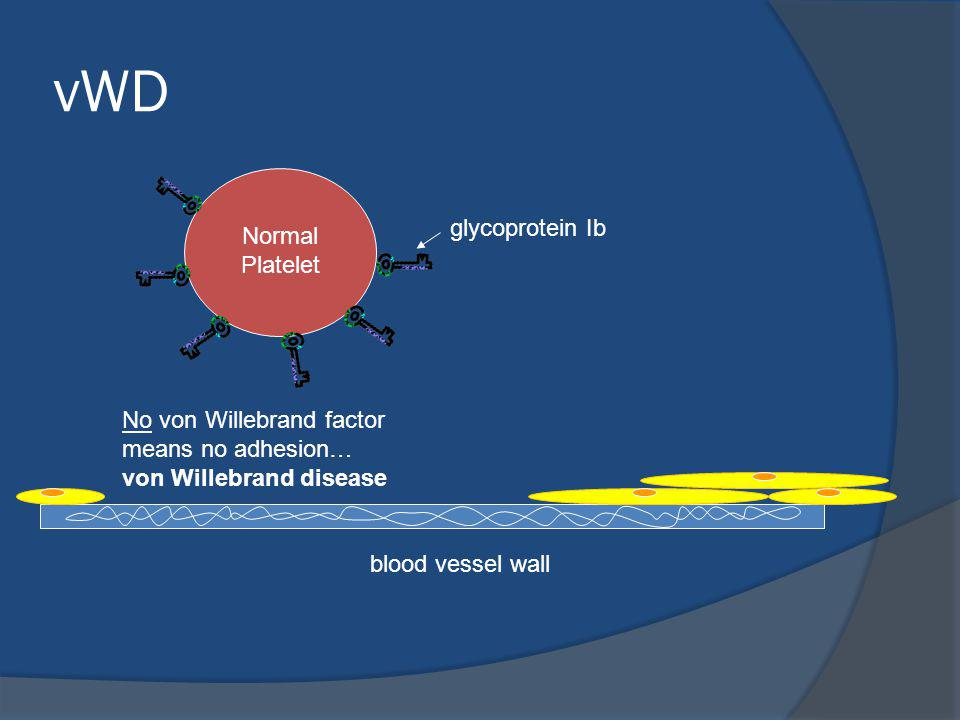 vWD glycoprotein Ib Normal Platelet
