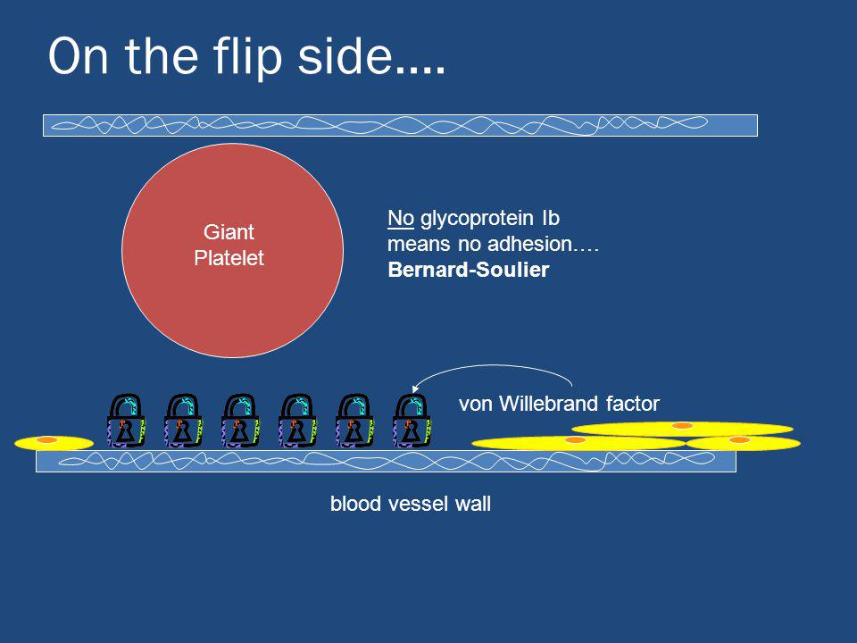 On the flip side…. No glycoprotein Ib means no adhesion…. Bernard-Soulier. Giant Platelet. von Willebrand factor.