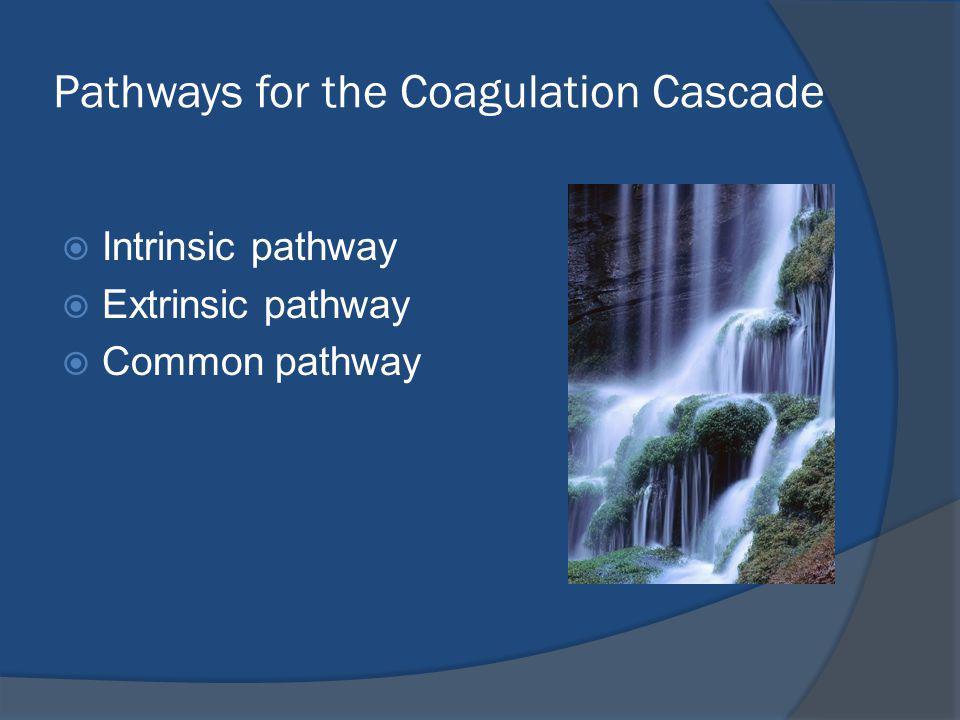 Pathways for the Coagulation Cascade