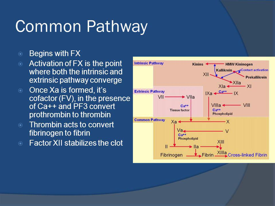 Common Pathway Begins with FX