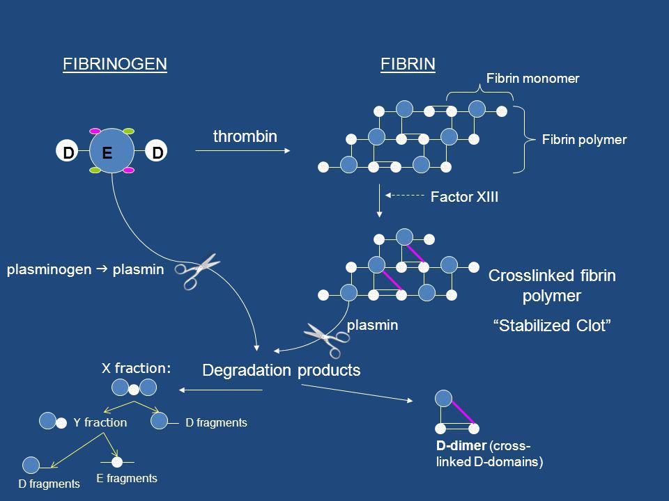 Crosslinked fibrin polymer