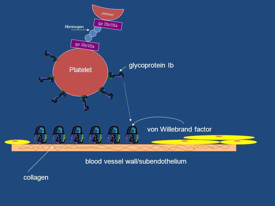 blood vessel wall/subendothelium