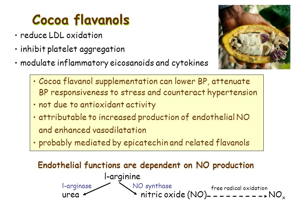Endothelial functions are dependent on NO production