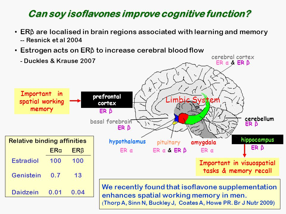 Can soy isoflavones improve cognitive function