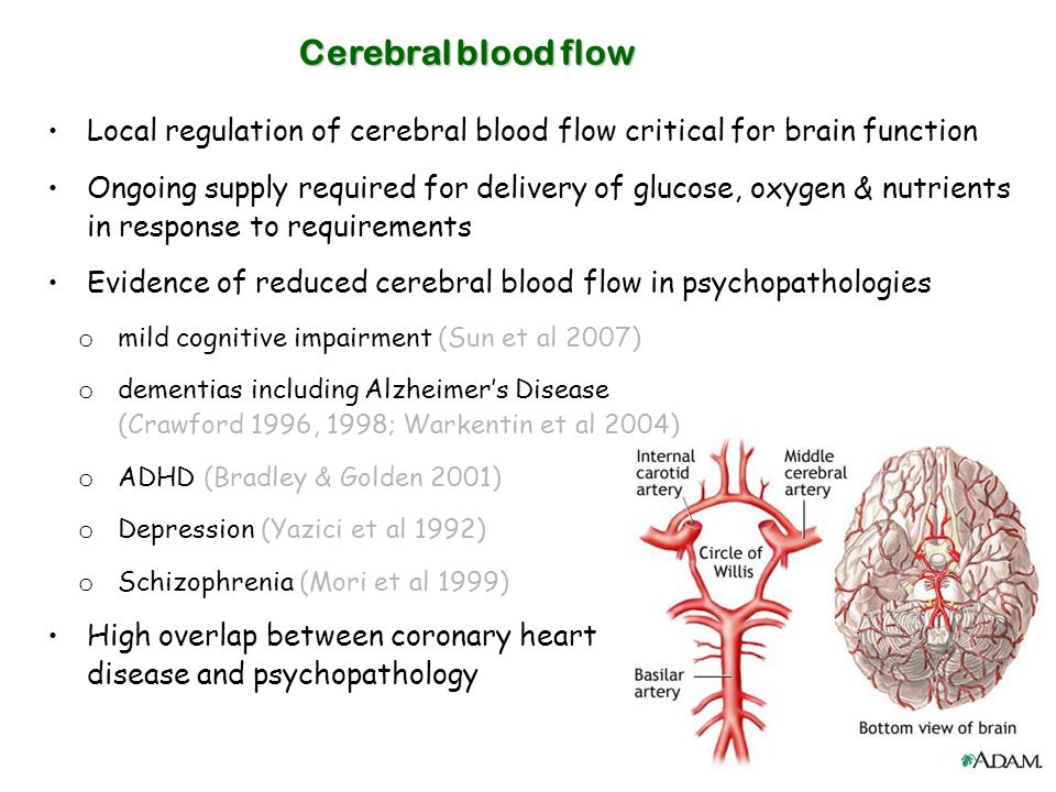 Cerebral blood flow Local regulation of cerebral blood flow critical for brain function.