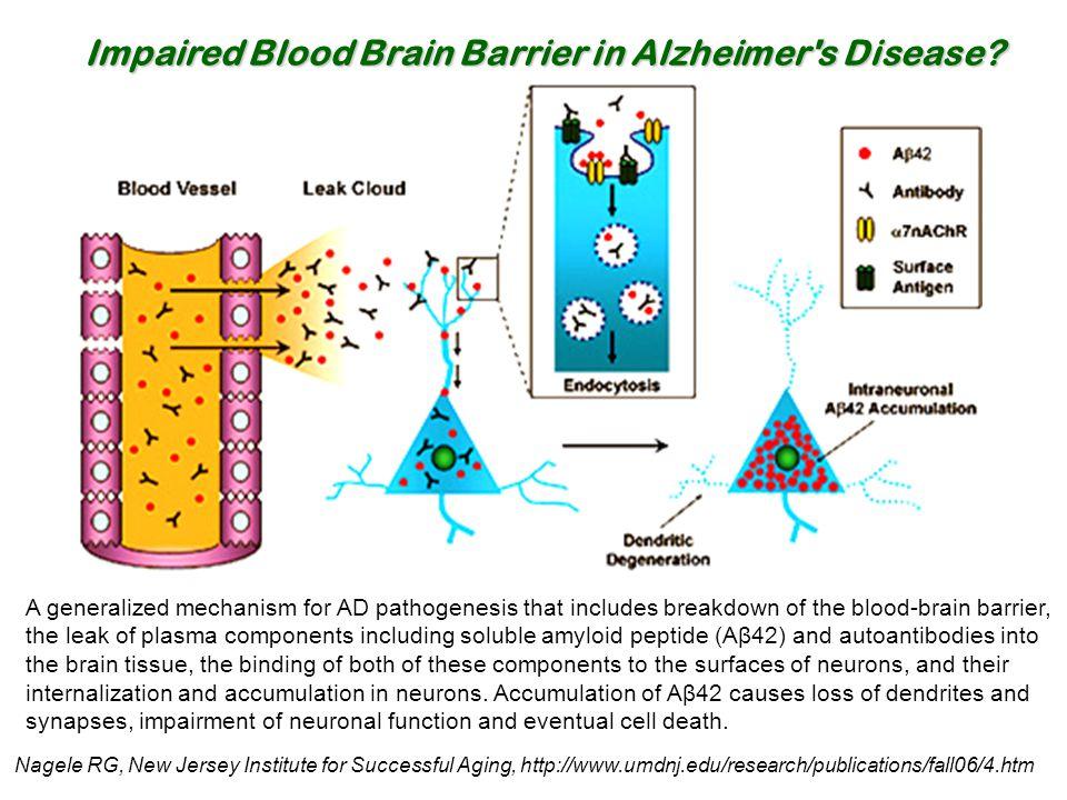 Impaired Blood Brain Barrier in Alzheimer s Disease
