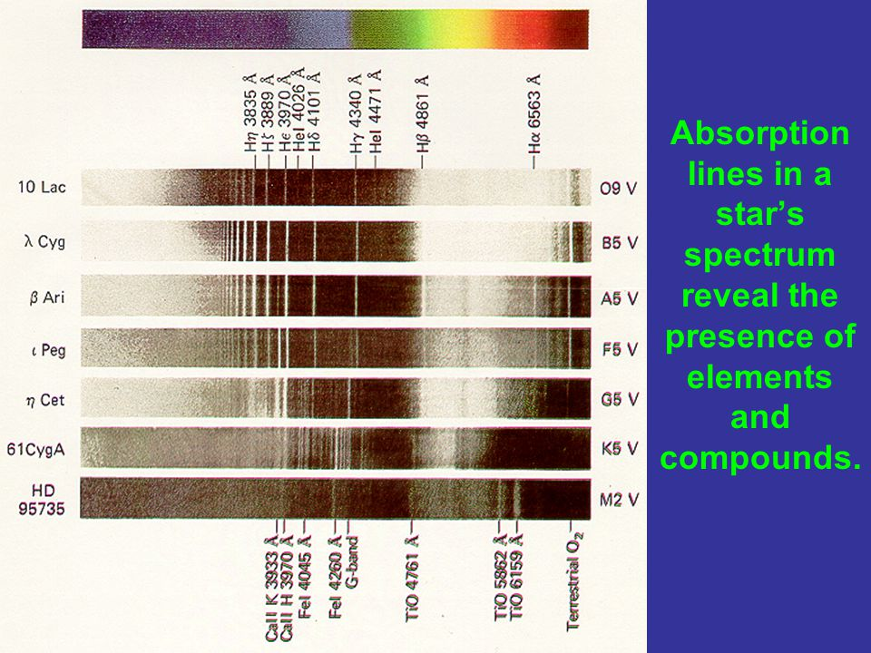 Absorption lines in a star's spectrum reveal the presence of elements and compounds.