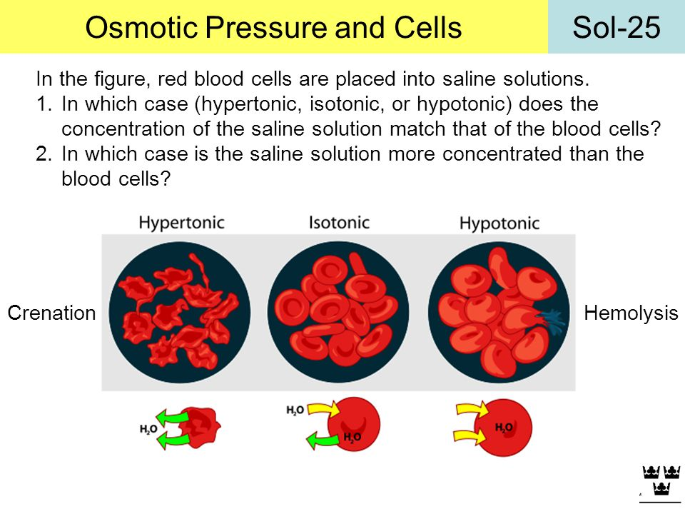 Osmotic Pressure and Cells