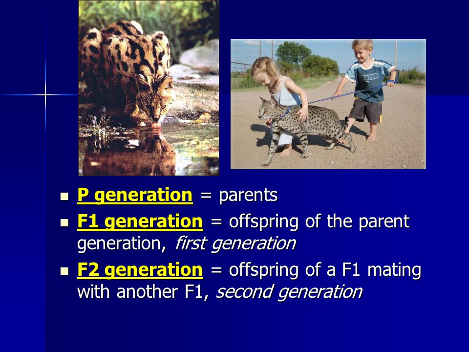 F1 generation = offspring of the parent generation, first generation