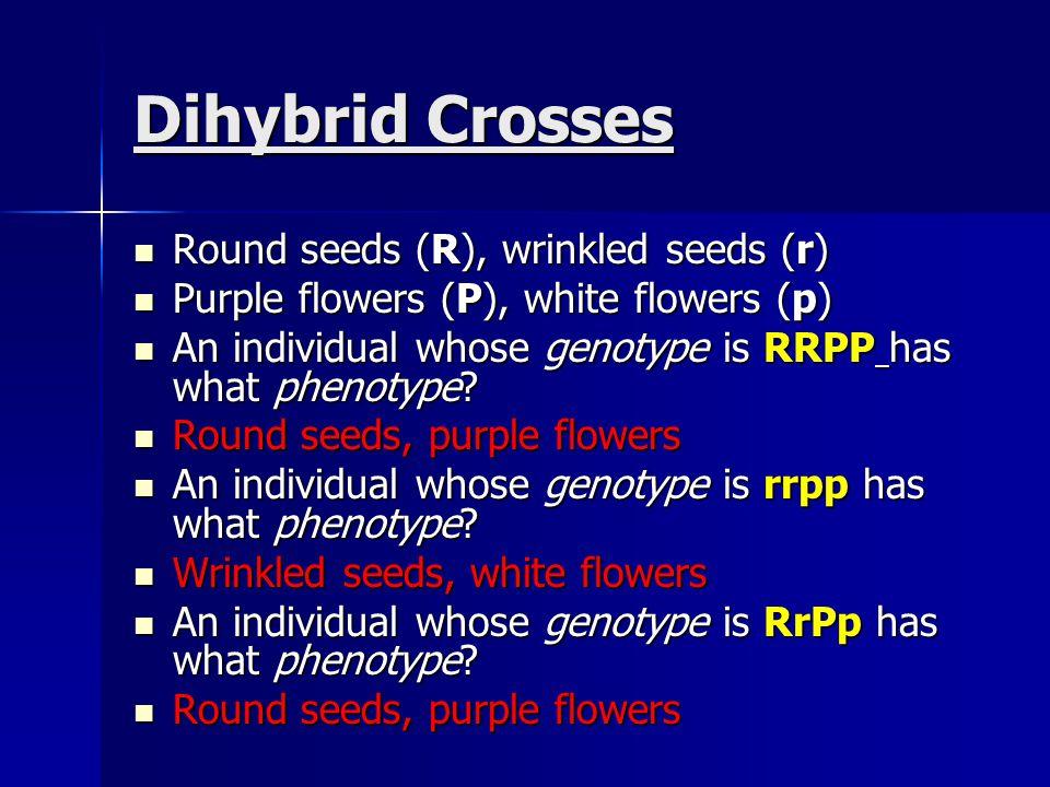Dihybrid Crosses Round seeds (R), wrinkled seeds (r)