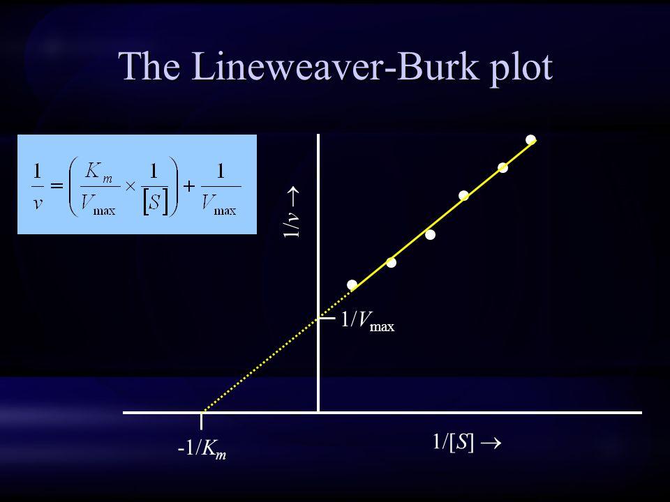 The Lineweaver-Burk plot