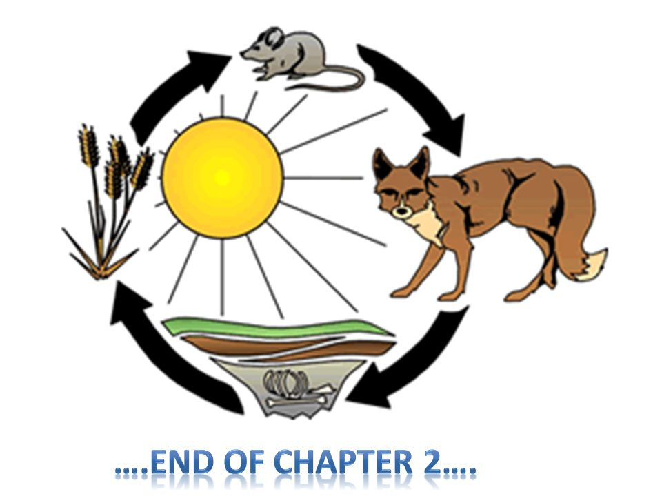 ….End of Chapter 2….