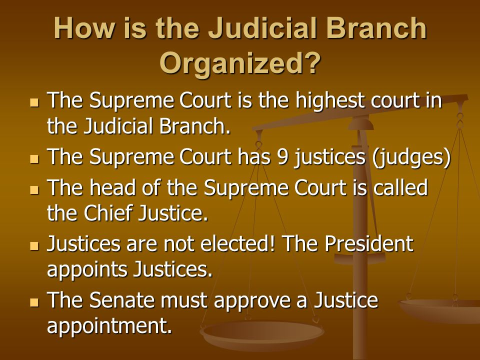 How is the Judicial Branch Organized