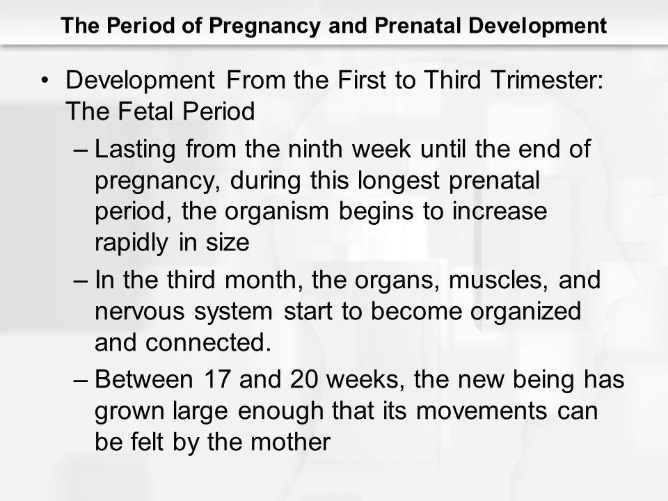 The Period of Pregnancy and Prenatal Development