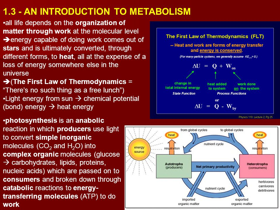 1.3 - AN INTRODUCTION TO METABOLISM