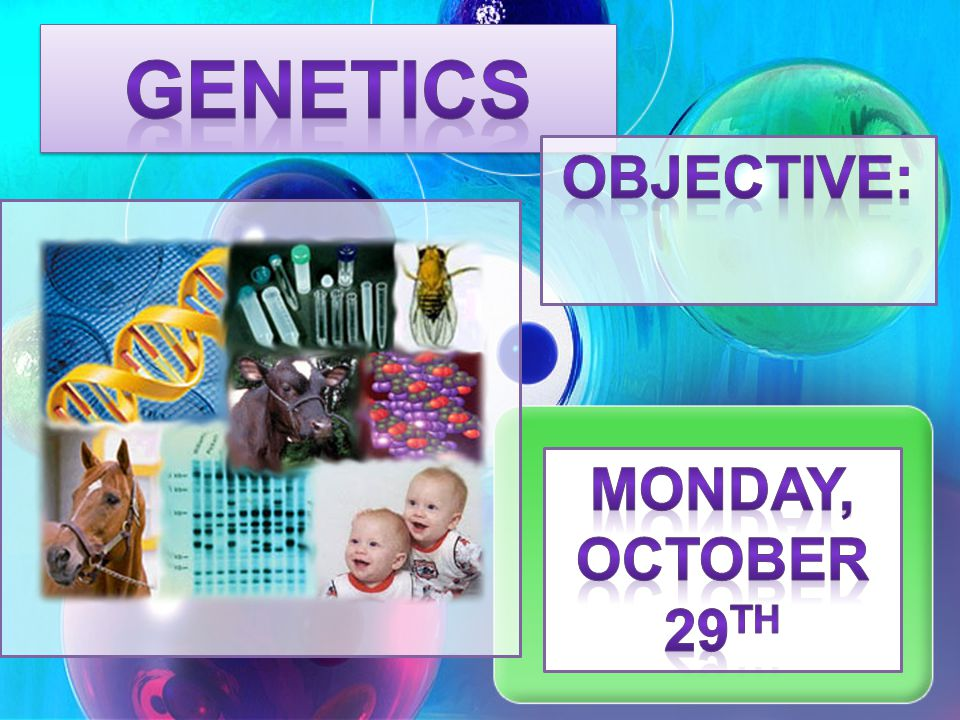 Genetics Objective: Monday, October 29th