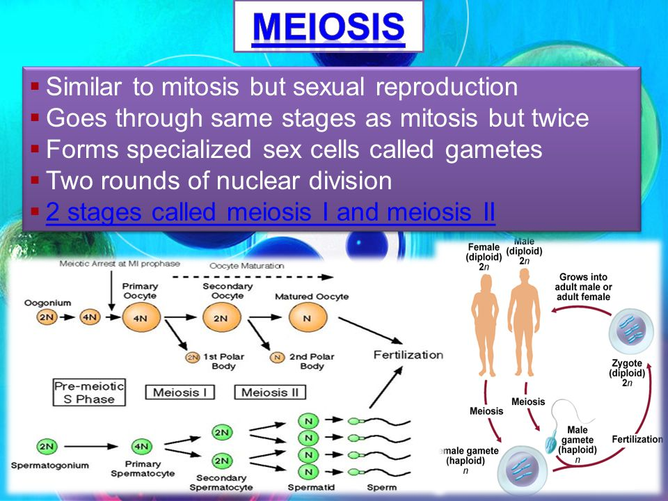 Meiosis Similar to mitosis but sexual reproduction