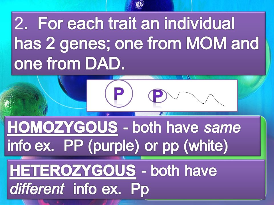 2. For each trait an individual has 2 genes; one from MOM and one from DAD.