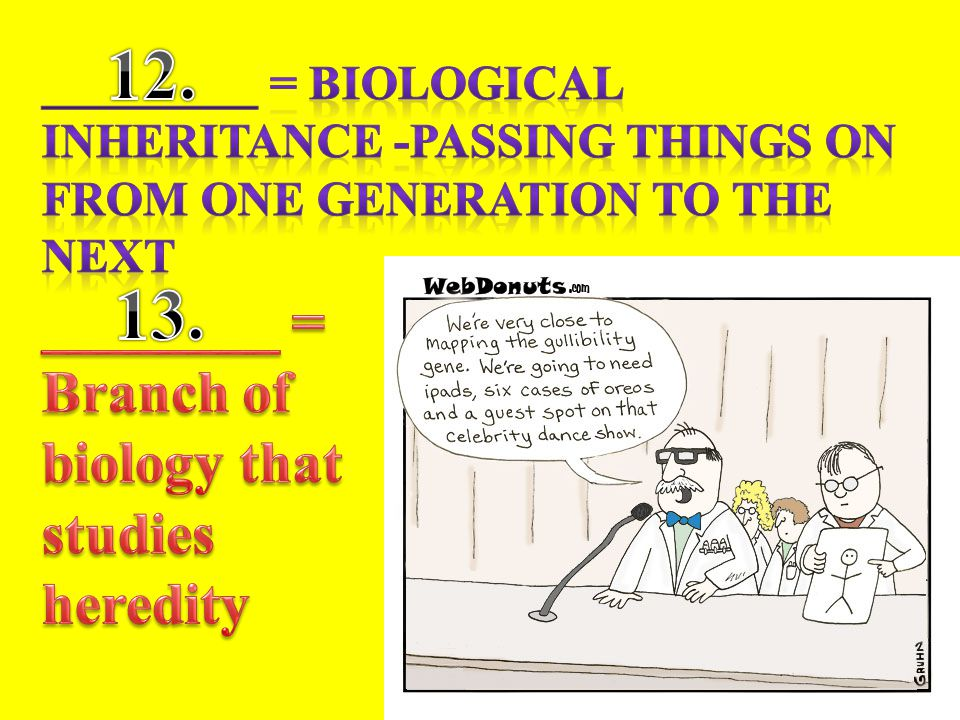 12. 13. ________ = Branch of biology that studies heredity