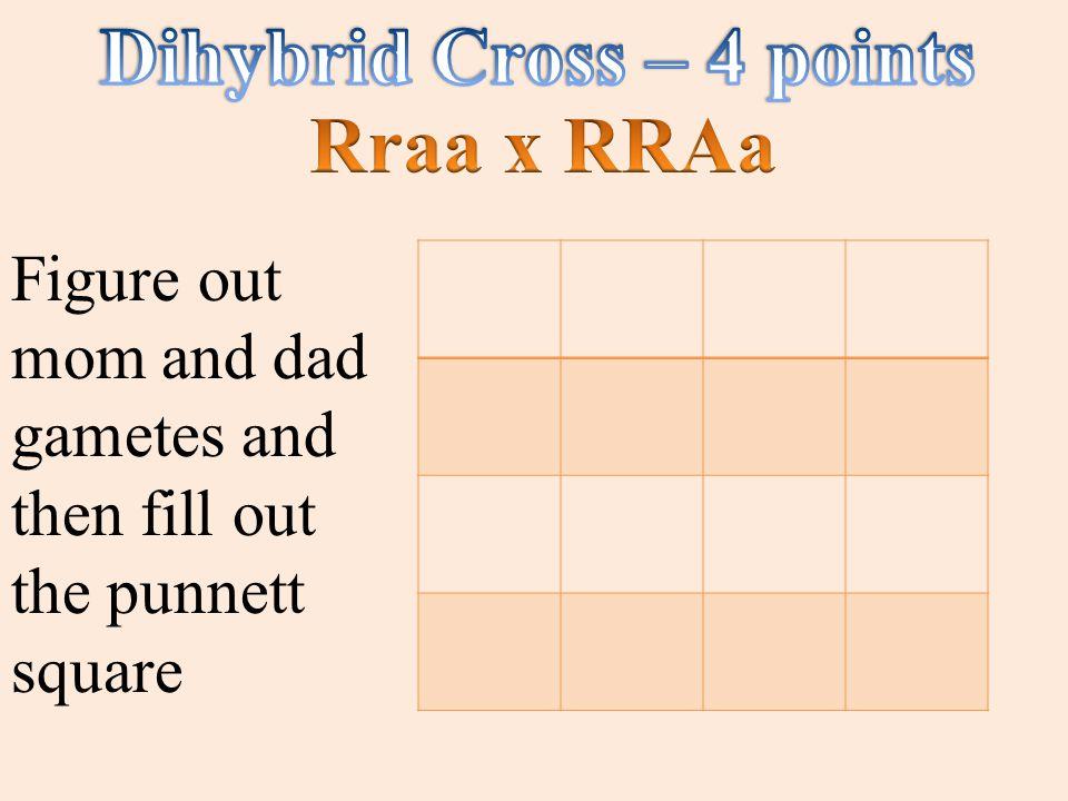 Dihybrid Cross – 4 points
