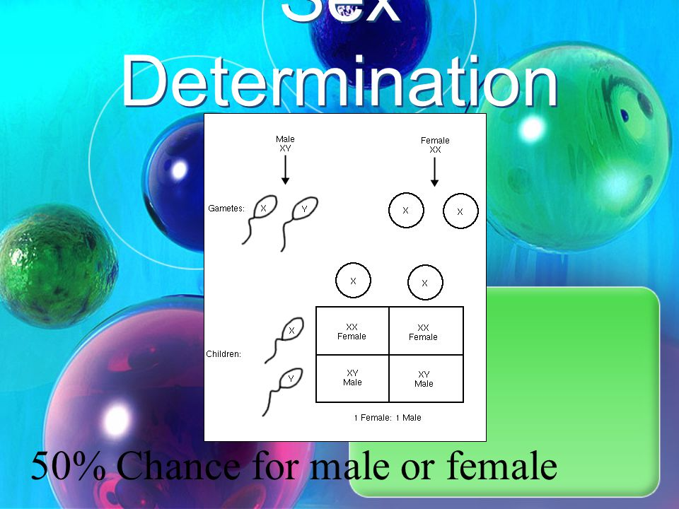 Sex Determination 50% Chance for male or female