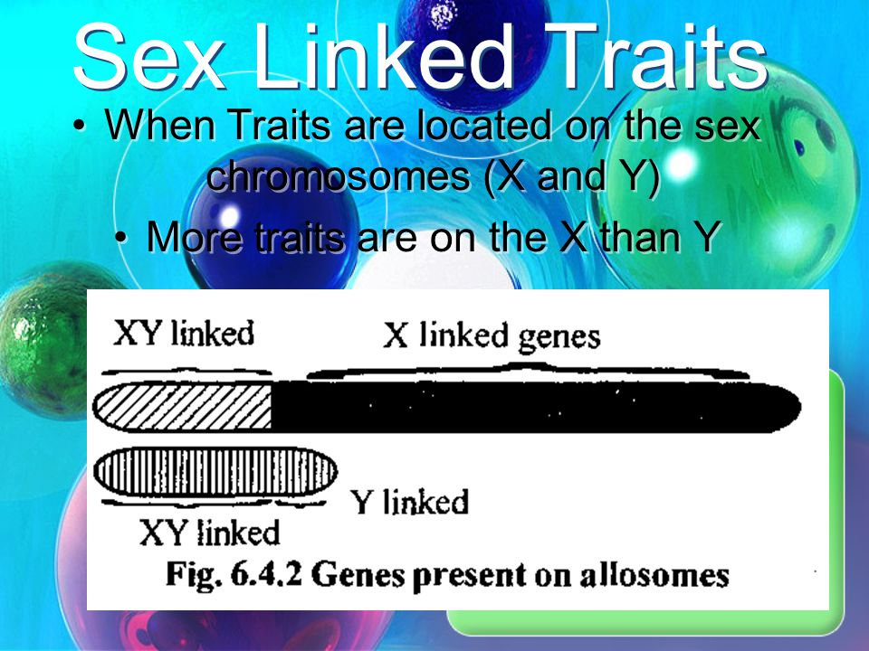 Sex Linked Traits When Traits are located on the sex chromosomes (X and Y) More traits are on the X than Y.