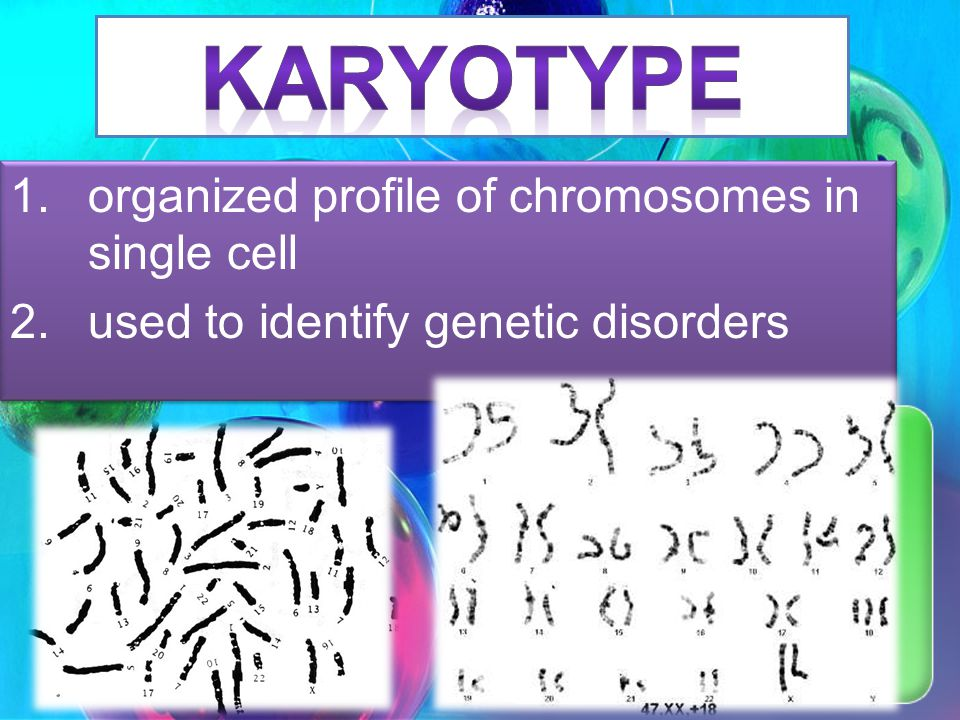 Karyotype organized profile of chromosomes in single cell