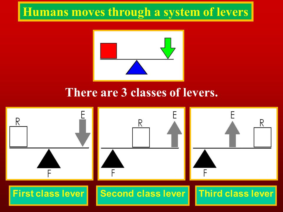 Humans moves through a system of levers There are 3 classes of levers.