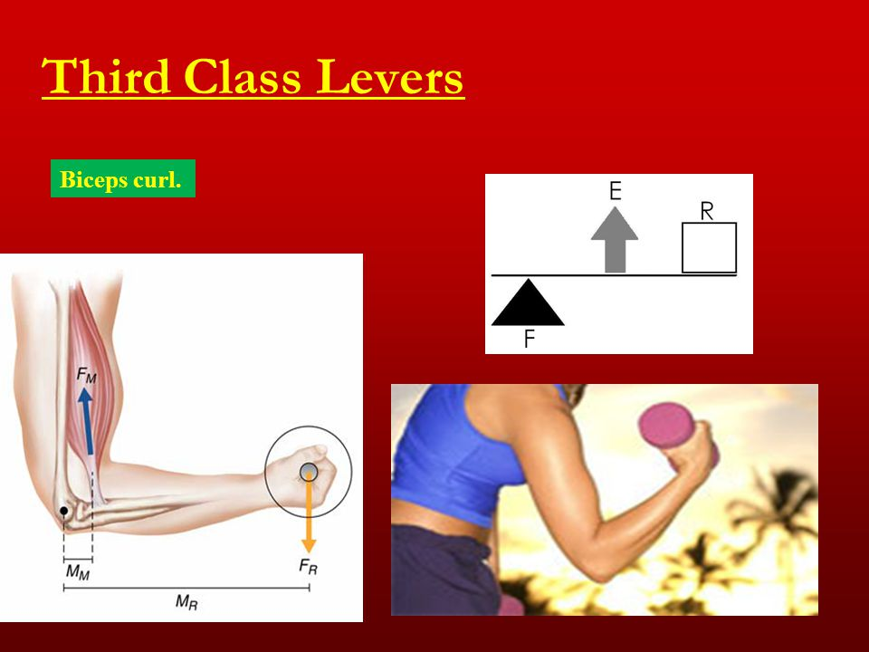 Third Class Levers Biceps curl.