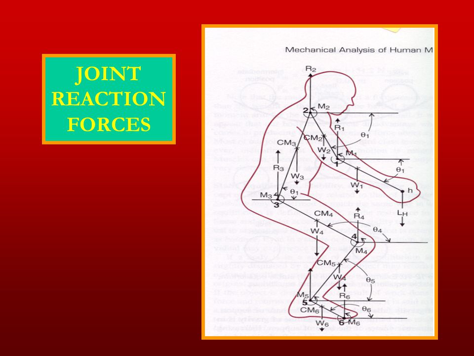JOINT REACTION FORCES