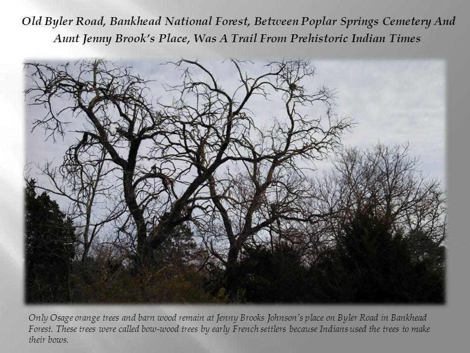 Old Byler Road, Bankhead National Forest, Between Poplar Springs Cemetery And Aunt Jenny Brook's Place, Was A Trail From Prehistoric Indian Times