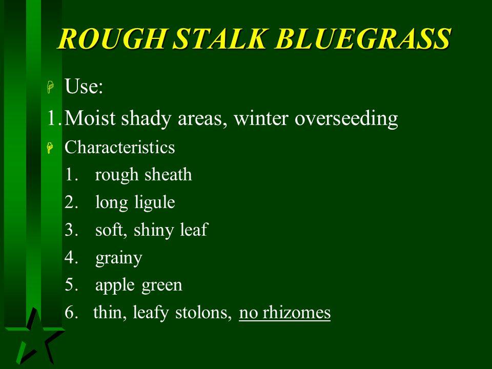 ROUGH STALK BLUEGRASS Use: 1. Moist shady areas, winter overseeding