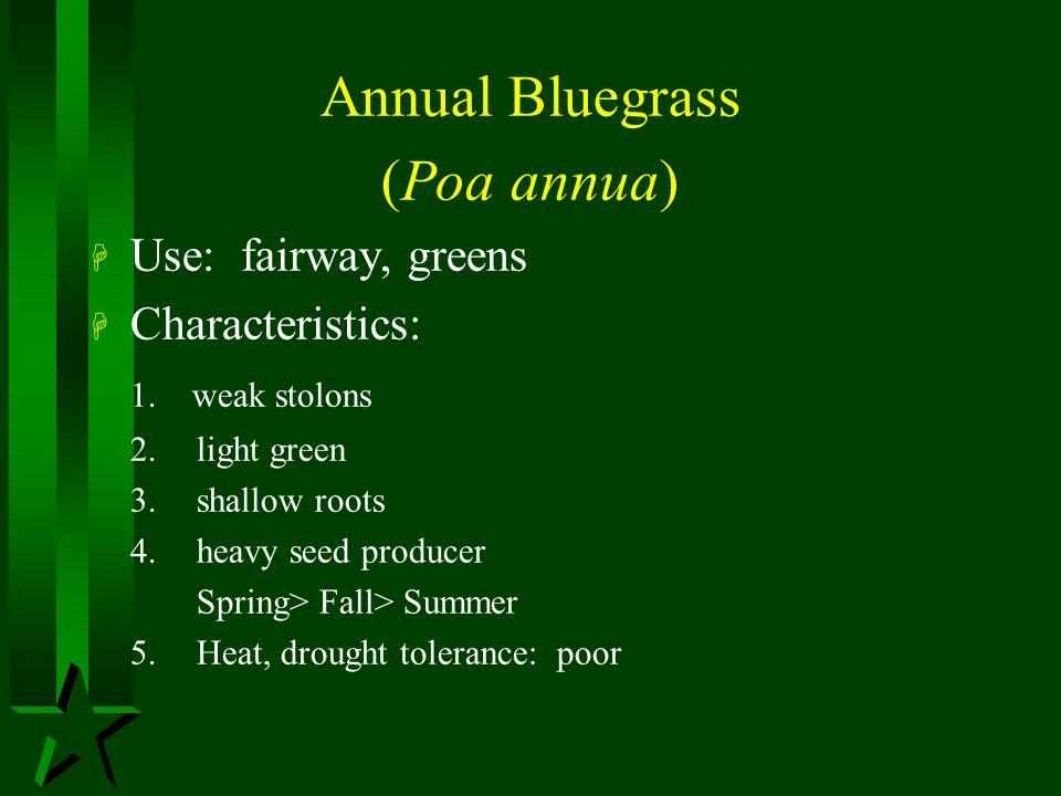 Annual Bluegrass (Poa annua) Use: fairway, greens Characteristics: