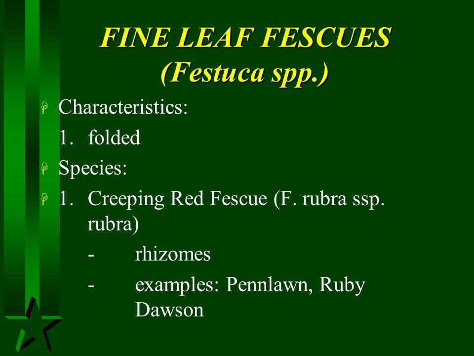 FINE LEAF FESCUES (Festuca spp.)