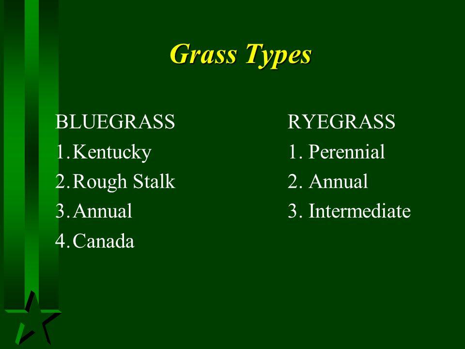 Grass Types BLUEGRASS RYEGRASS 1. Kentucky 1. Perennial