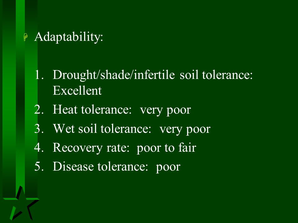 Adaptability: 1. Drought/shade/infertile soil tolerance: Excellent. 2. Heat tolerance: very poor.