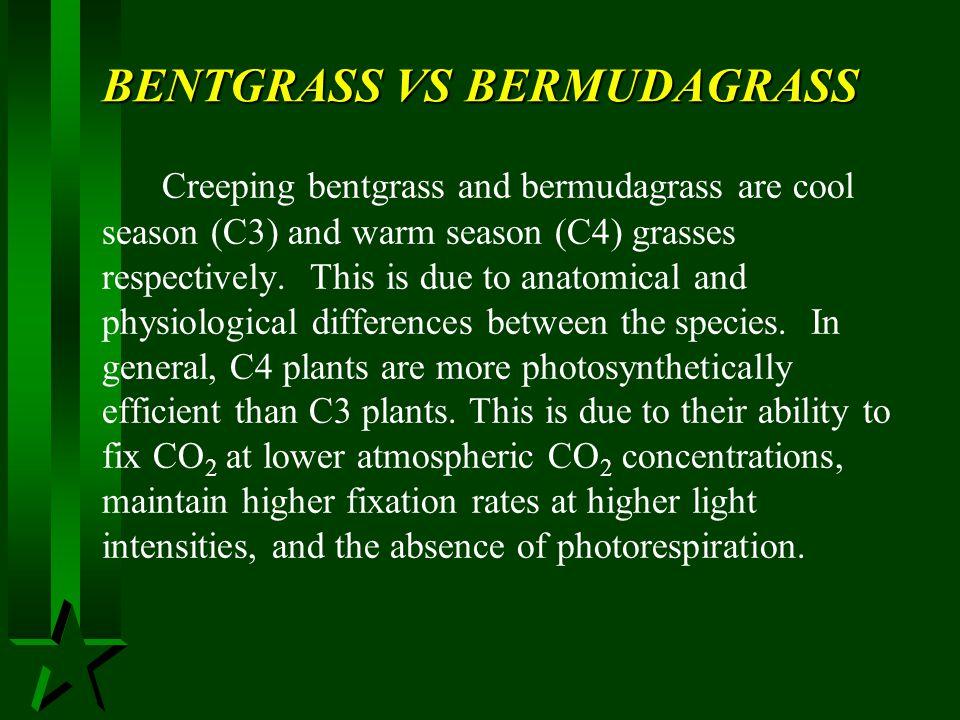 BENTGRASS VS BERMUDAGRASS
