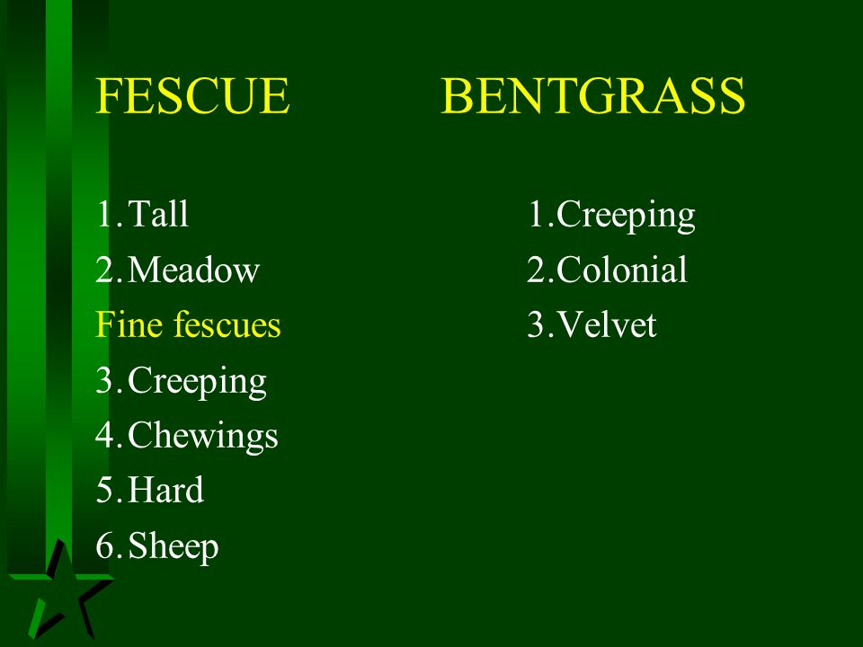 FESCUE BENTGRASS 1. Tall 1.Creeping 2. Meadow 2.Colonial