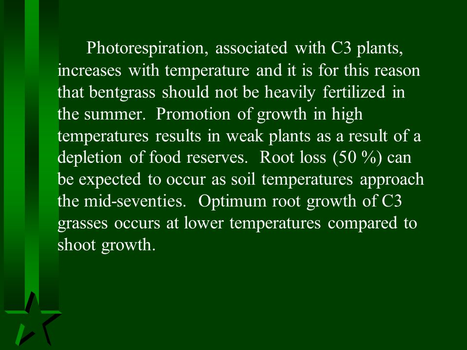 Photorespiration, associated with C3 plants, increases with temperature and it is for this reason that bentgrass should not be heavily fertilized in the summer.
