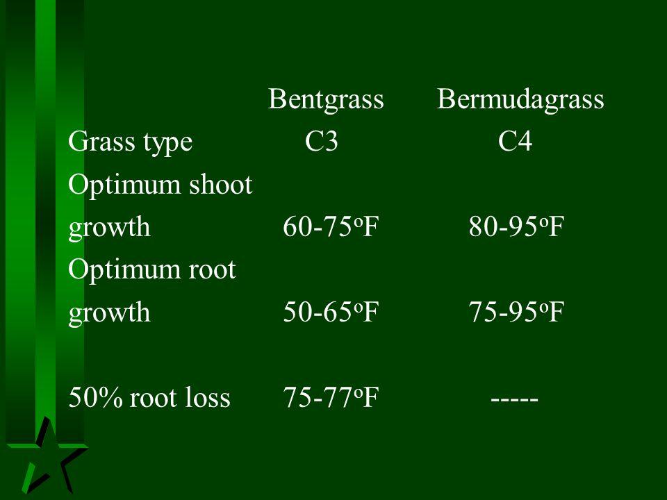Bentgrass Bermudagrass