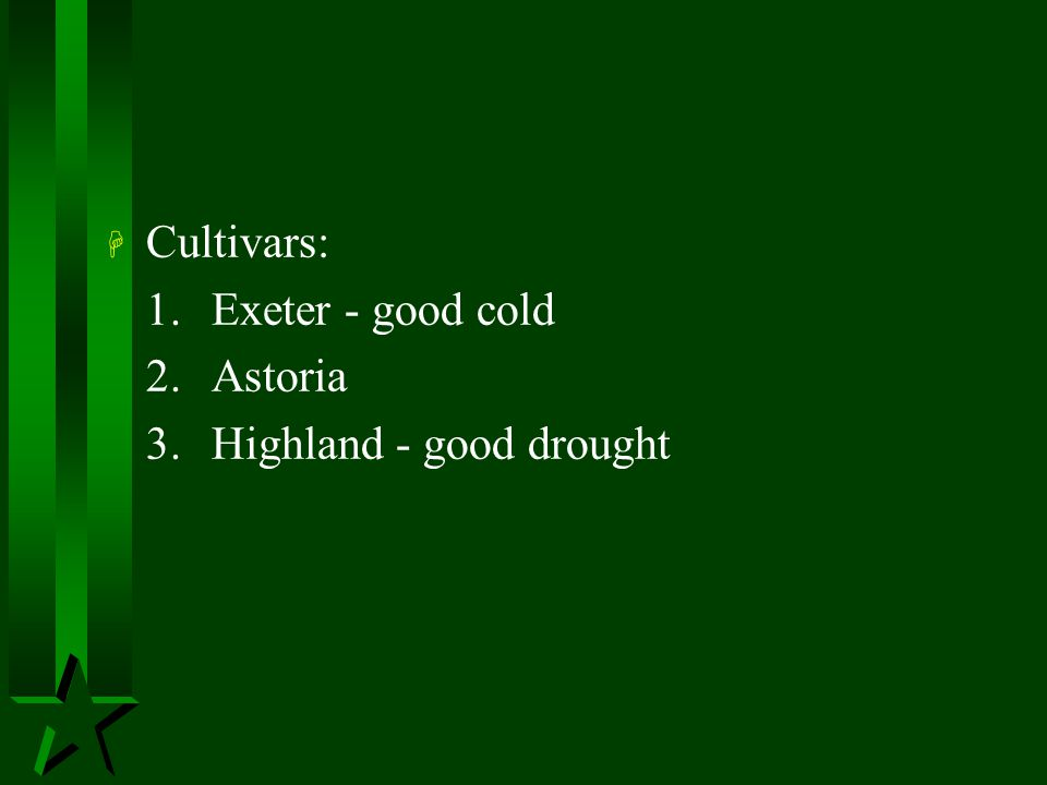 Cultivars: 1. Exeter - good cold 2. Astoria 3. Highland - good drought