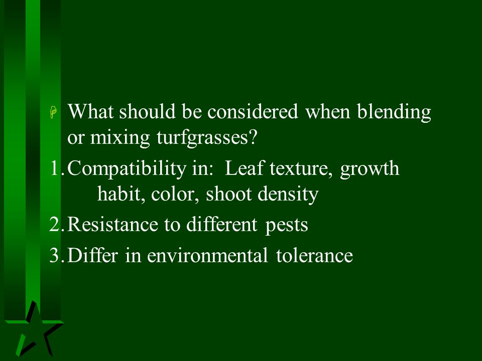 What should be considered when blending or mixing turfgrasses