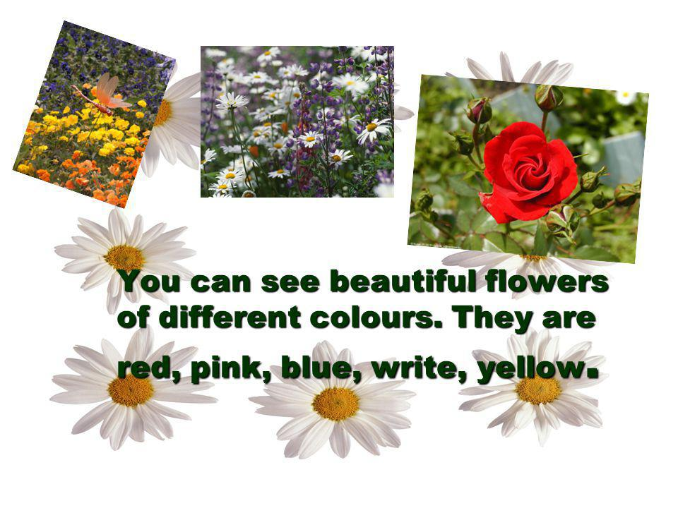 You can see beautiful flowers of different colours
