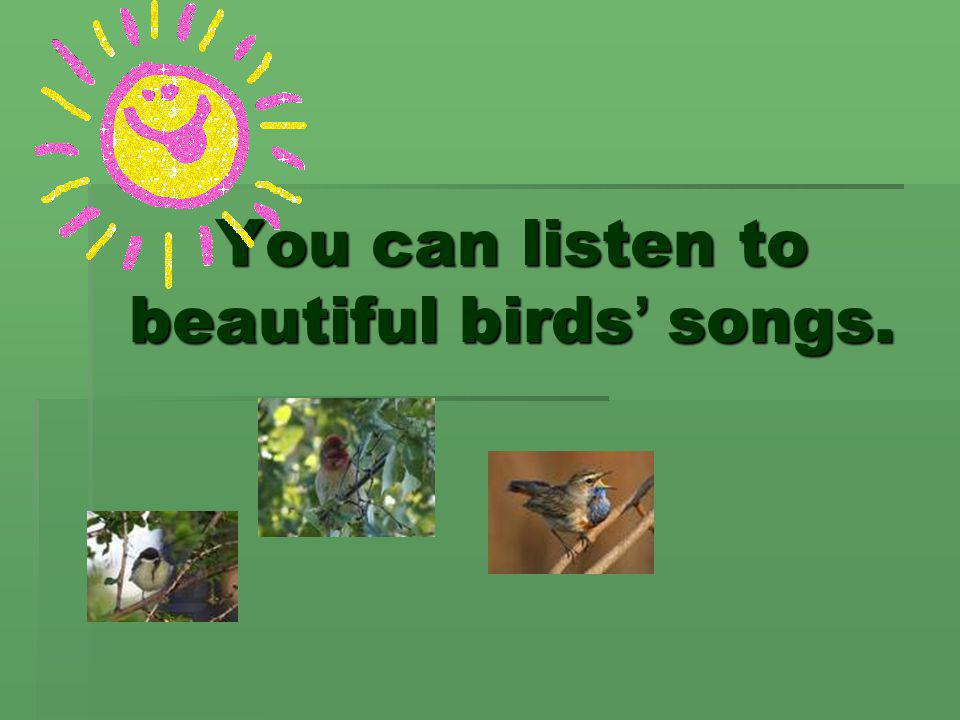 You can listen to beautiful birds' songs.