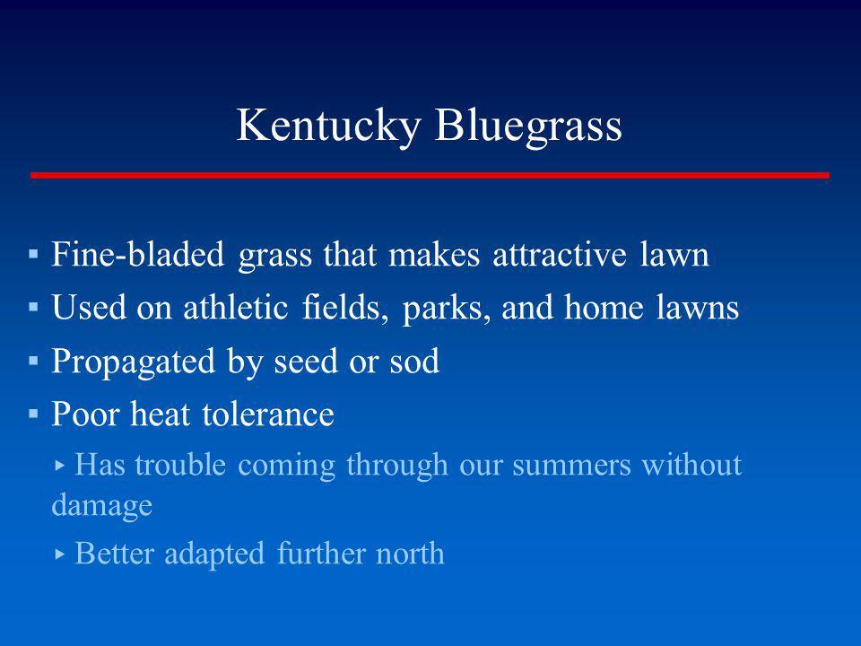 Kentucky Bluegrass Fine-bladed grass that makes attractive lawn