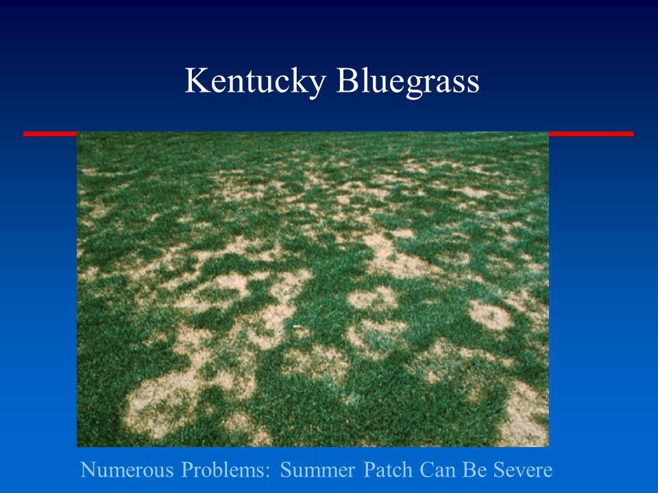 Numerous Problems: Summer Patch Can Be Severe