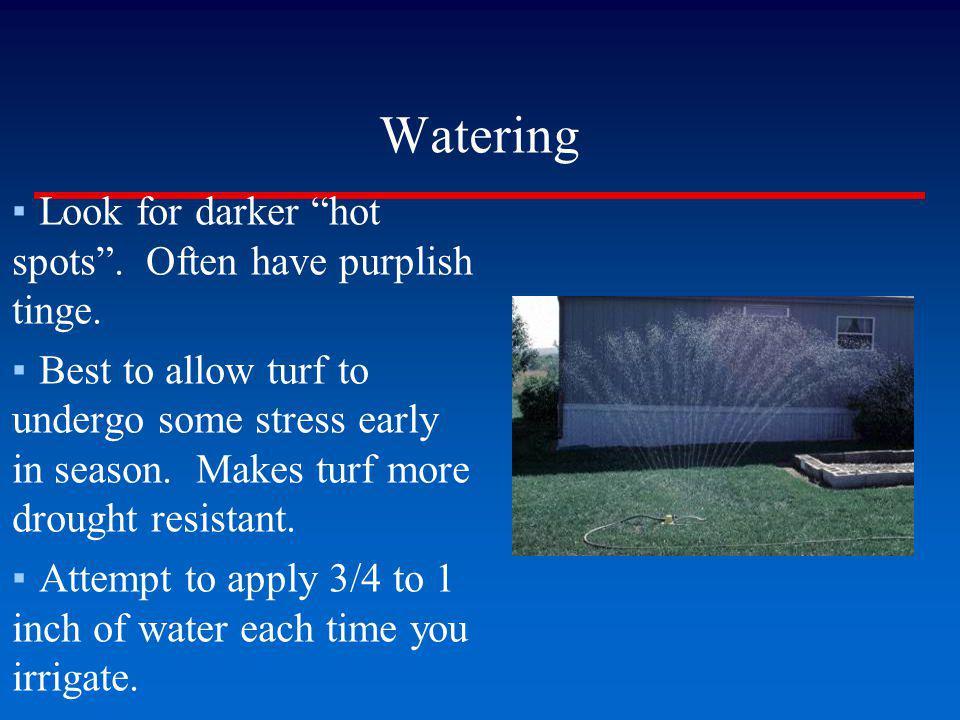 Watering Look for darker hot spots . Often have purplish tinge.