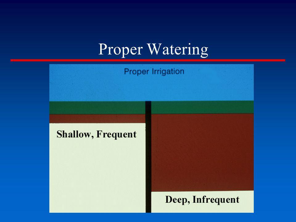 Proper Watering
