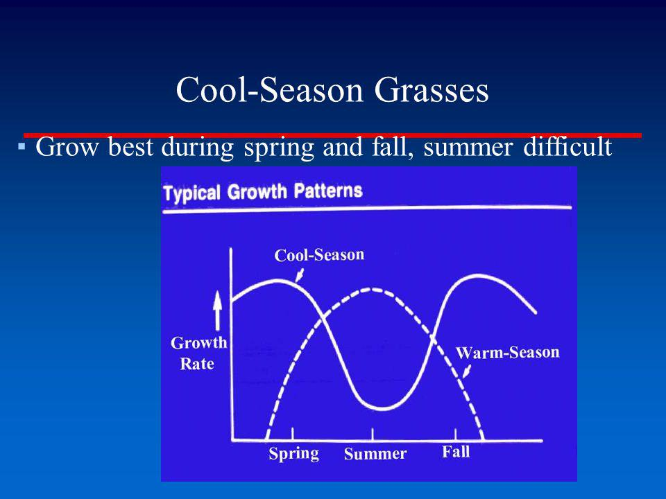 Cool-Season Grasses Grow best during spring and fall, summer difficult